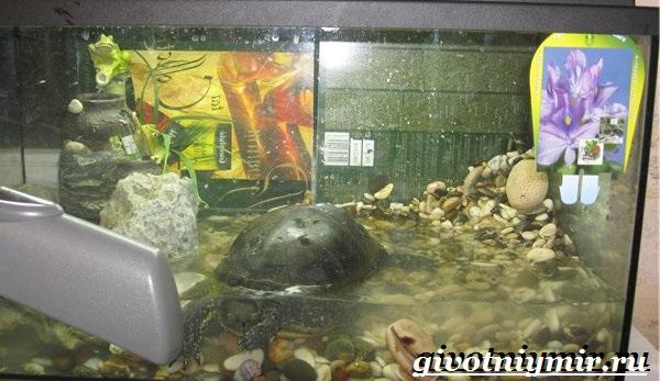 Условия содержания болотной черепахи в домашних условиях 605