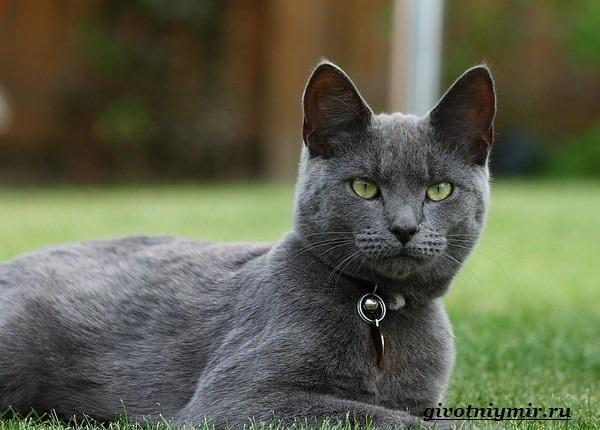 Голубая-кошка-3