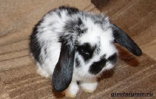 Декоративный-кролик-Особенности-содержания-декоративных-кроликов-в-домашних-условиях-1