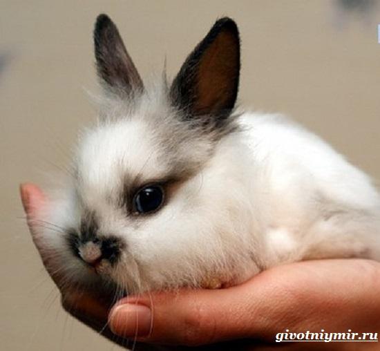 Декоративный-кролик-Особенности-содержания-декоративных-кроликов-в-домашних-условиях-2