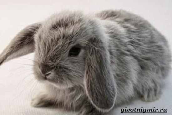 Декоративный-кролик-Особенности-содержания-декоративных-кроликов-в-домашних-условиях-3