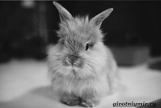 Декоративный-кролик-Особенности-содержания-декоративных-кроликов-в-домашних-условиях-5