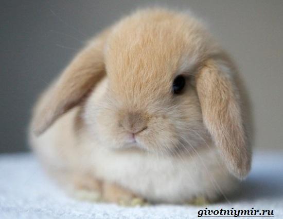 Декоративный-кролик-Особенности-содержания-декоративных-кроликов-в-домашних-условиях-6