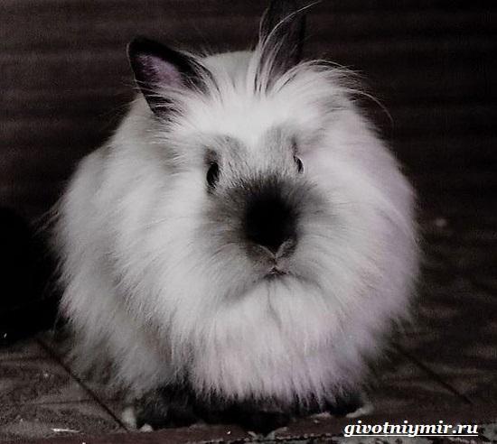 Декоративный-кролик-Особенности-содержания-декоративных-кроликов-в-домашних-условиях-7