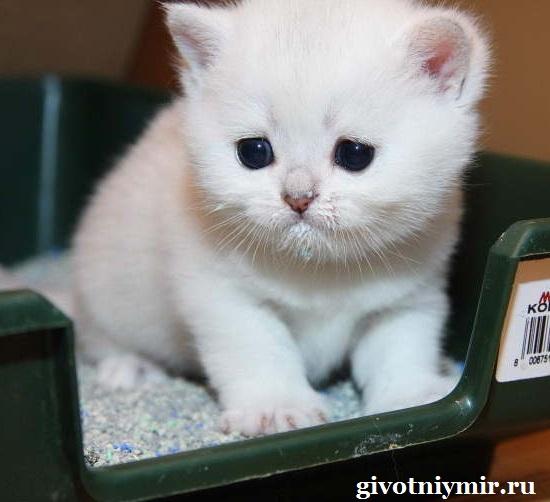 Как-кота-приучить-к-лотку-1
