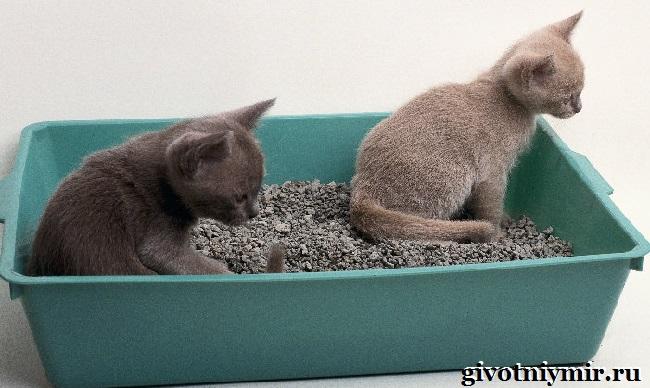 Как-кота-приучить-к-лотку-2