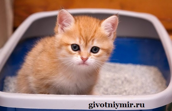 Как-кота-приучить-к-лотку-3