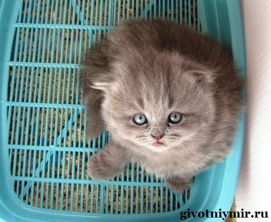 Как-кота-приучить-к-лотку-5