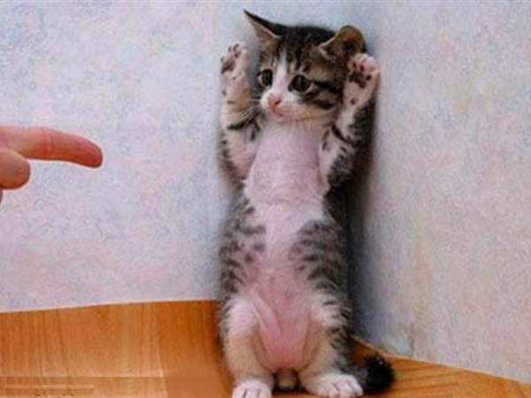 Как-кота-приучить-к-лотку-12