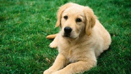 Клещи у собаки что делать?