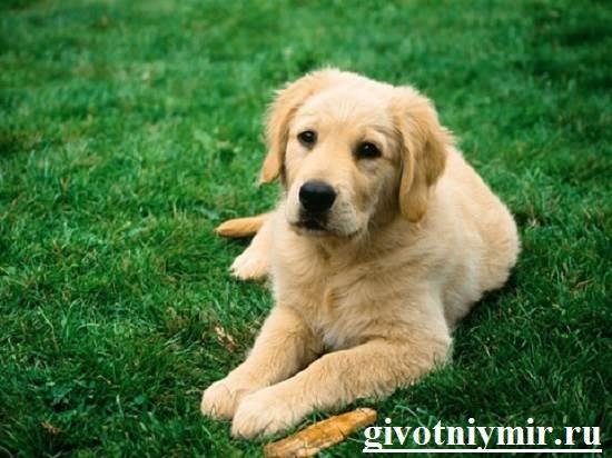 Клещи-у-собаки-что-делать-4