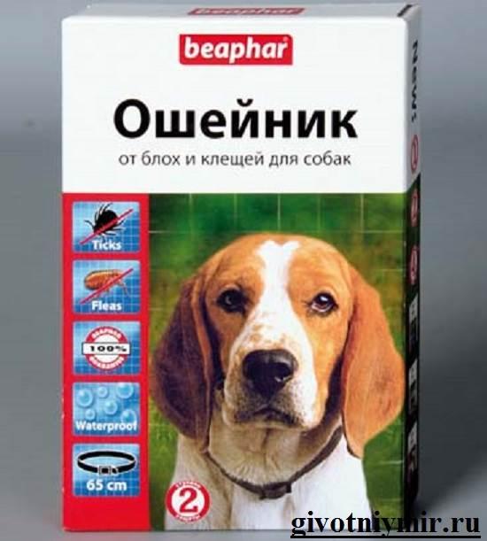 Клещи-у-собаки-что-делать-6
