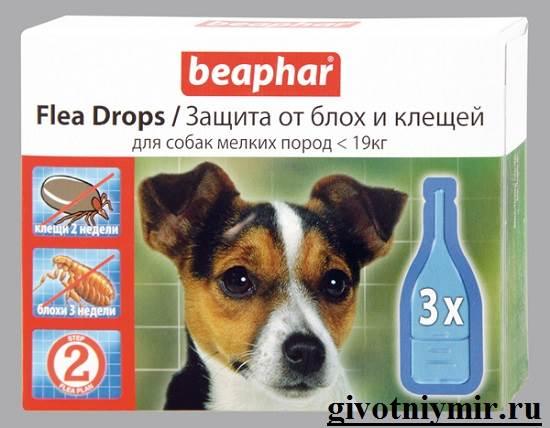 Клещи-у-собаки-что-делать-8