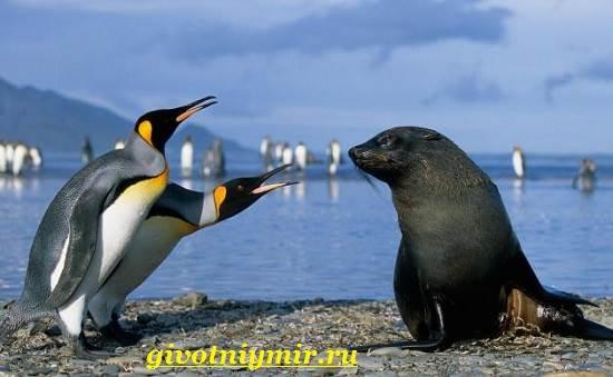 Императорский-пингвин-Среда-обитания-императорского-пингвина-11