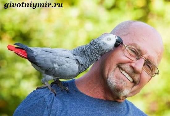 Попугай-Жако-Цена-Жако-Как-ухаживать-за-попугаем-Жако-1