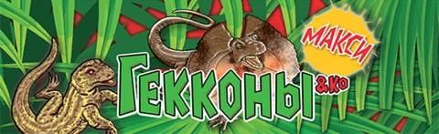 Геккон-Среда-обитания-и-образ-жизни-геккона-3