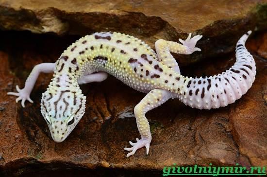 Геккон-Среда-обитания-и-образ-жизни-геккона-8