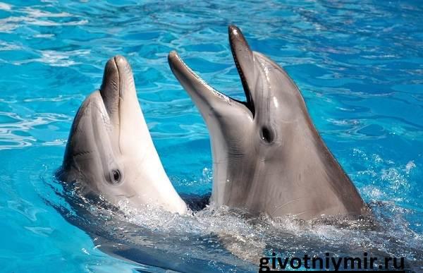 Дельфин-Особенности-и-среда-обитания-дельфинов-2