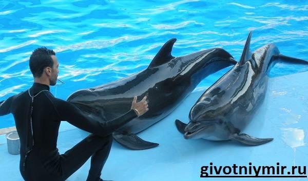 Дельфин-Особенности-и-среда-обитания-дельфинов-4