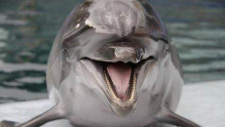 Дельфин. Особенности и среда обитания дельфинов