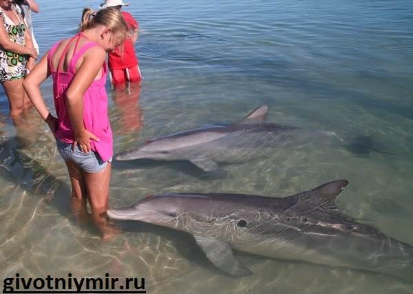Дельфин-Особенности-и-среда-обитания-дельфинов-6