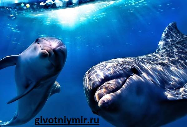Дельфин-Особенности-и-среда-обитания-дельфинов-7