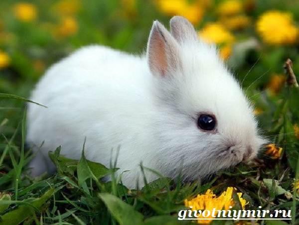 Заяц-беляк-Особенности-и-среда-обитания-зайца-беляка-8