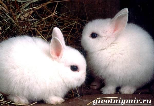 Заяц-беляк-Особенности-и-среда-обитания-зайца-беляка-9