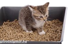 Наполнитель для кошачьего туалета и его виды