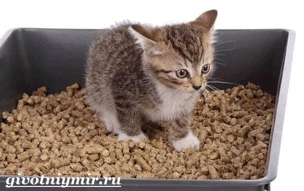 Наполнитель-для-кошачьего-туалета-и-его-виды-1