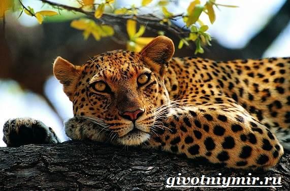 Животные-красной-книги-России-1