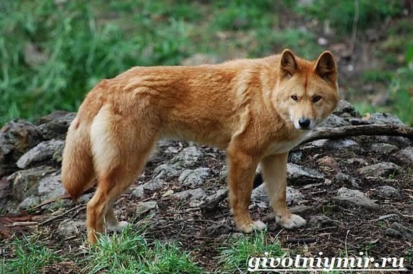 Животные-красной-книги-России-6