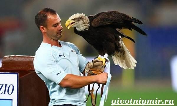 Птица-орел-Образ-жизни-и-среда-обитания-орла-12