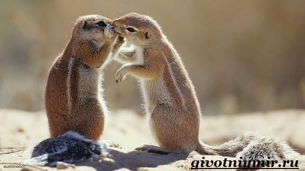 Суслик-животное-Образ-жизни-и-среда-обитания-суслика-1