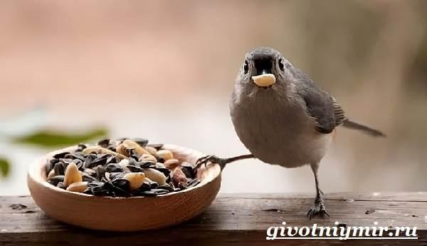Воробей-птица-Образ-жизни-и-среда-обитания-воробья-7