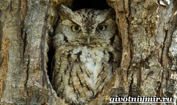Филин-птица-Образ-жизни-и-среда-обитания-филина-11