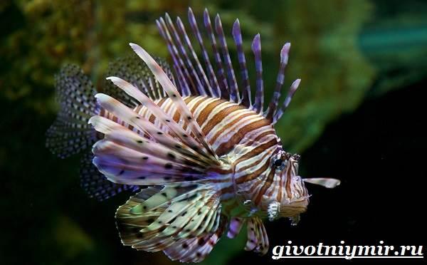 Рыба-зебра-Образ-жизни-и-среда-обитания-рыбы-зебры-1