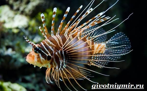 Рыба-зебра-Образ-жизни-и-среда-обитания-рыбы-зебры-10