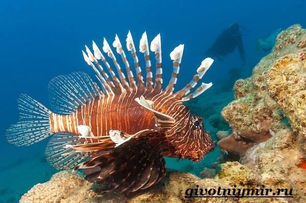 Рыба-зебра-Образ-жизни-и-среда-обитания-рыбы-зебры-11