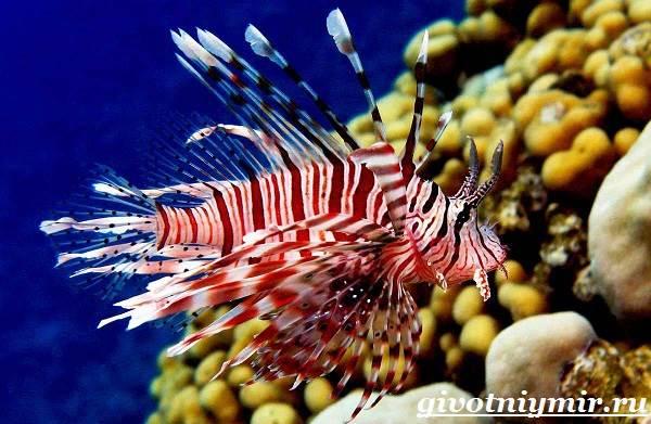 Рыба-зебра-Образ-жизни-и-среда-обитания-рыбы-зебры-5