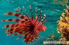 Рыба зебра. Образ жизни и среда обитания рыбы-зебры