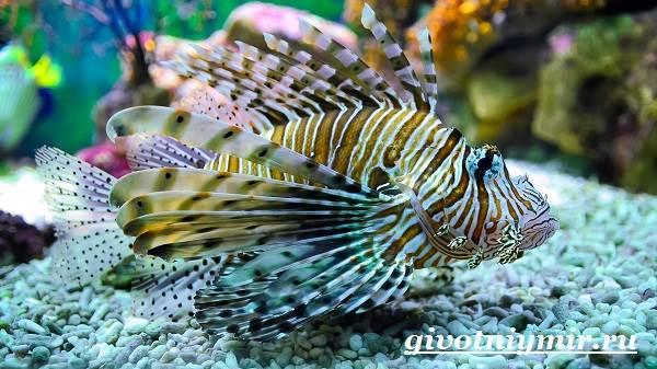 Рыба-зебра-Образ-жизни-и-среда-обитания-рыбы-зебры-7
