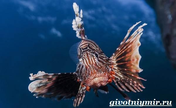 Рыба-зебра-Образ-жизни-и-среда-обитания-рыбы-зебры-8