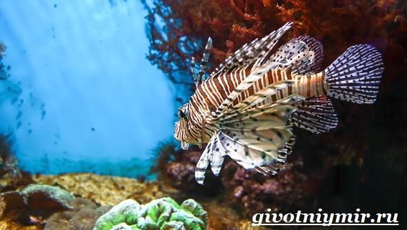 Рыба-зебра-Образ-жизни-и-среда-обитания-рыбы-зебры-9