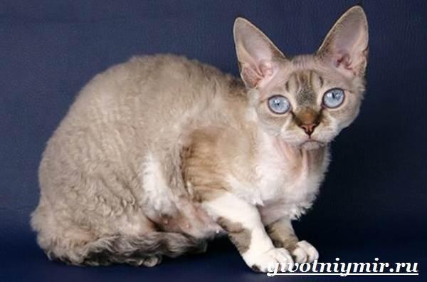 Болезни и проблемы кошек породы девон-рекс, сколько живут девон-рексы | 396x600
