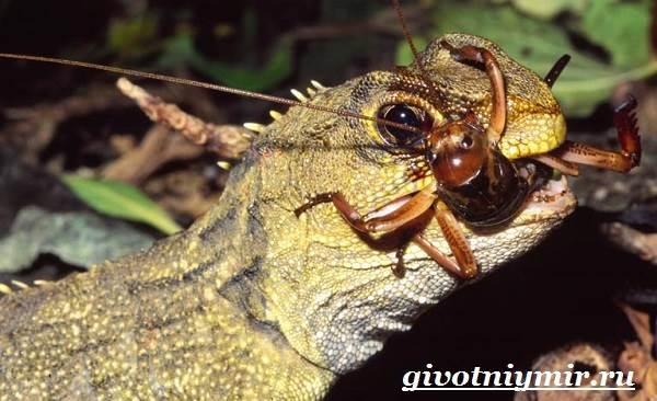 Трехглазая ящерица