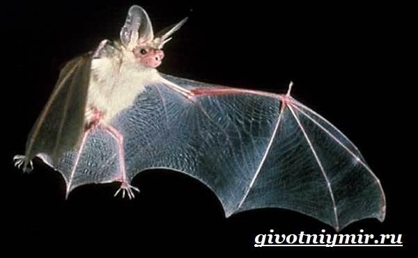 Как летают летучие мыши