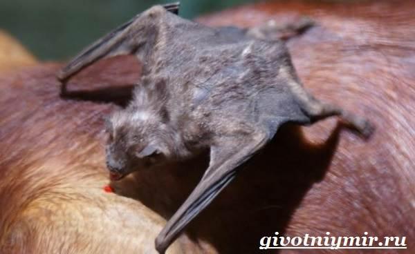 Летучая-мышь-животное-Образ-жизни-и-среда-обитания-летучей-мыши-9