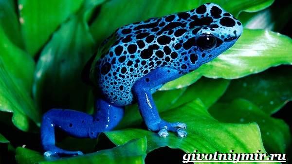 Лягушка-животное-Образ-жизни-и-среда-обитания-лягушки-4