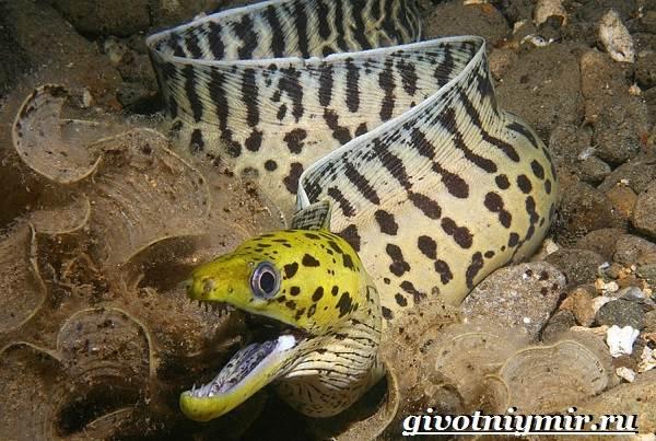 Мурена-рыба-Образ-жизни-и-среда-обитания-мурены-7